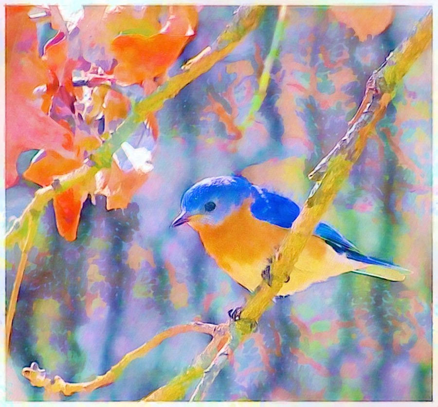 Bari's Bluebird watercolor