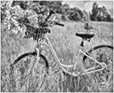 Birds and Bicycle BW
