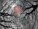 Branches Of The Moon
