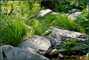 Creekside Grasses