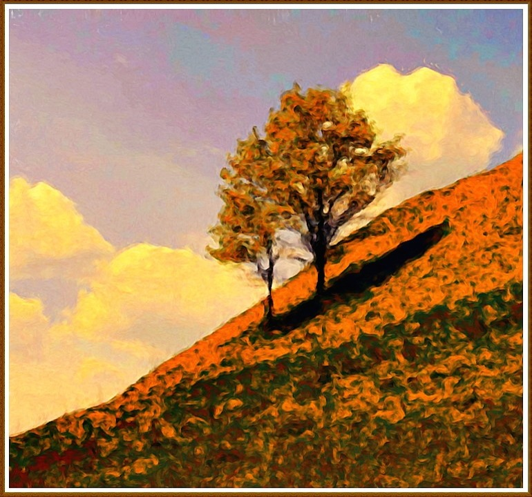 Hillside Trees