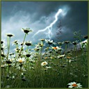 Lightening Field Daisies